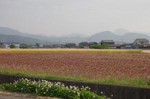 Imgp2011
